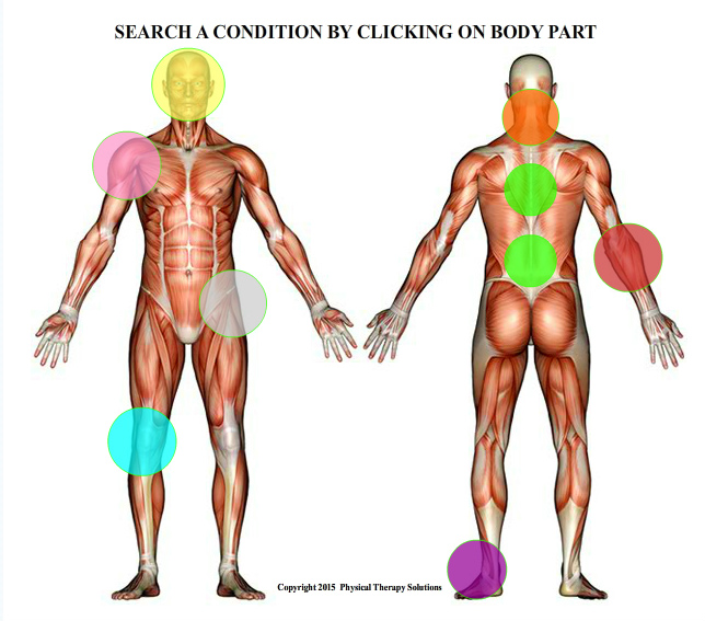 BODY PIC body diagram physical therapy solutions